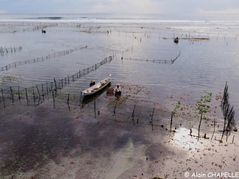 La culture d'algues