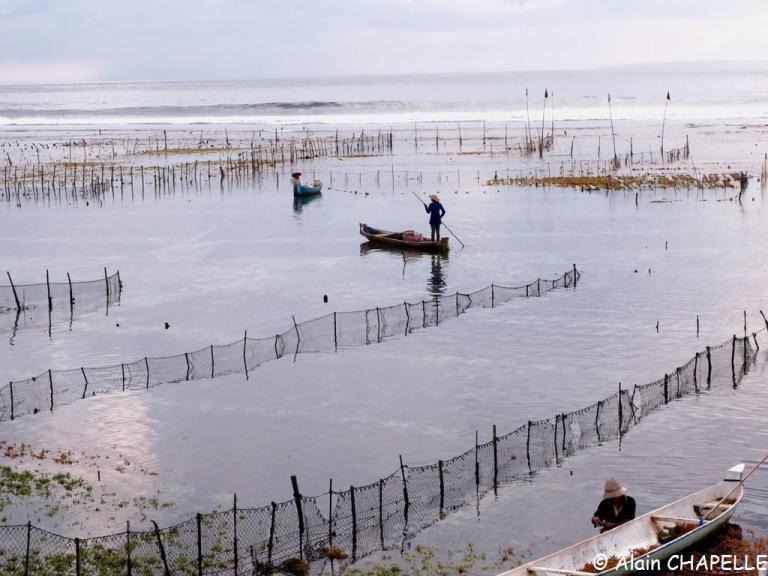 Les cultures d'algues de Nusa Ceningan