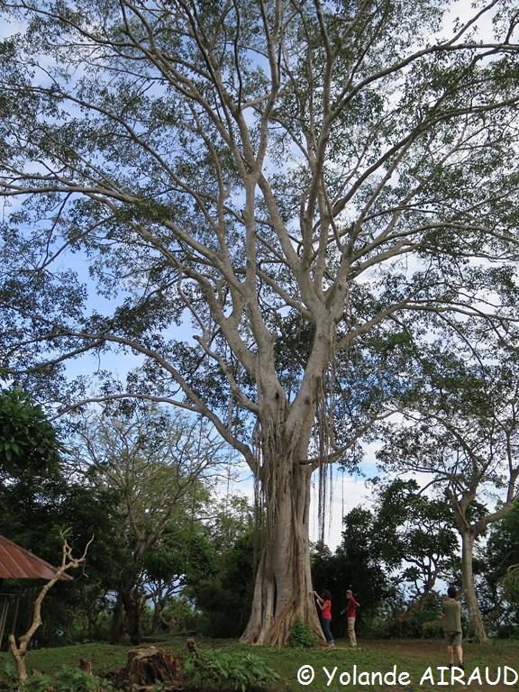 Un trés bel arbre