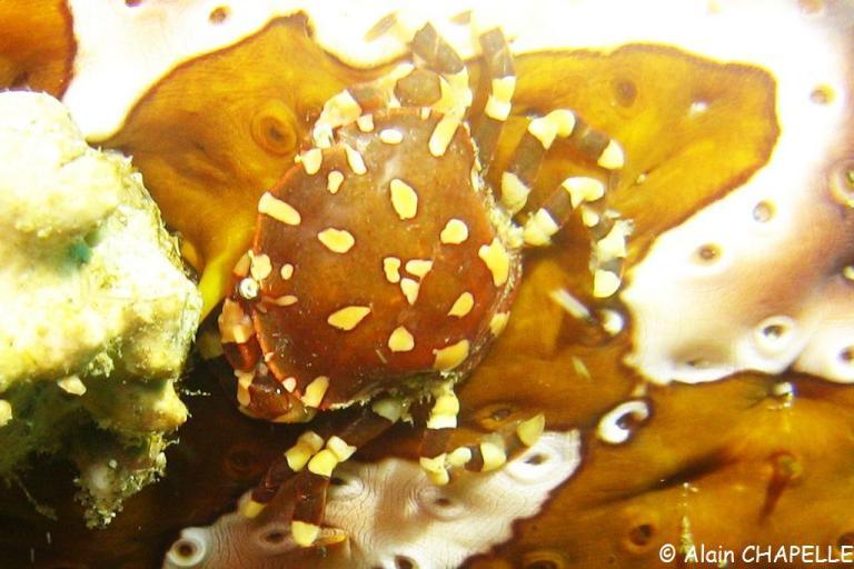 Petit crabe inconnu